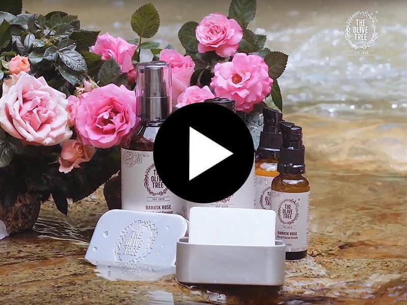 olive-tree-flagship-damask-video